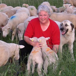 Janet McNally with lambs