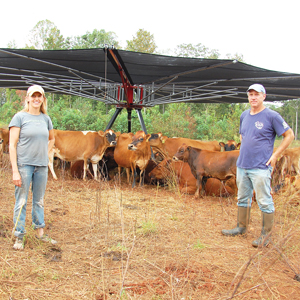 Suzanne and Hue with cows