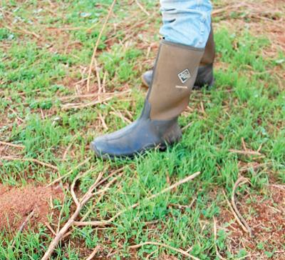 Boot in pasture